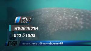 พบฉลามวาฬยาว 5 เมตร บริเวณเกาะพีพี