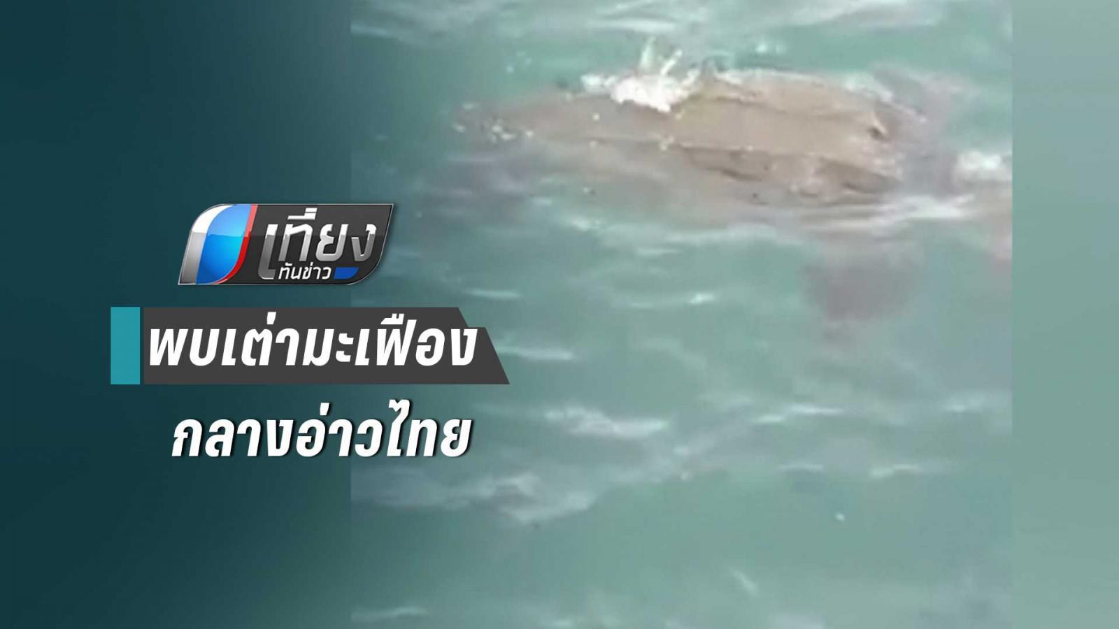 พบเต่ามะเฟืองกลางอ่าวไทยในรอบ 20 ปี