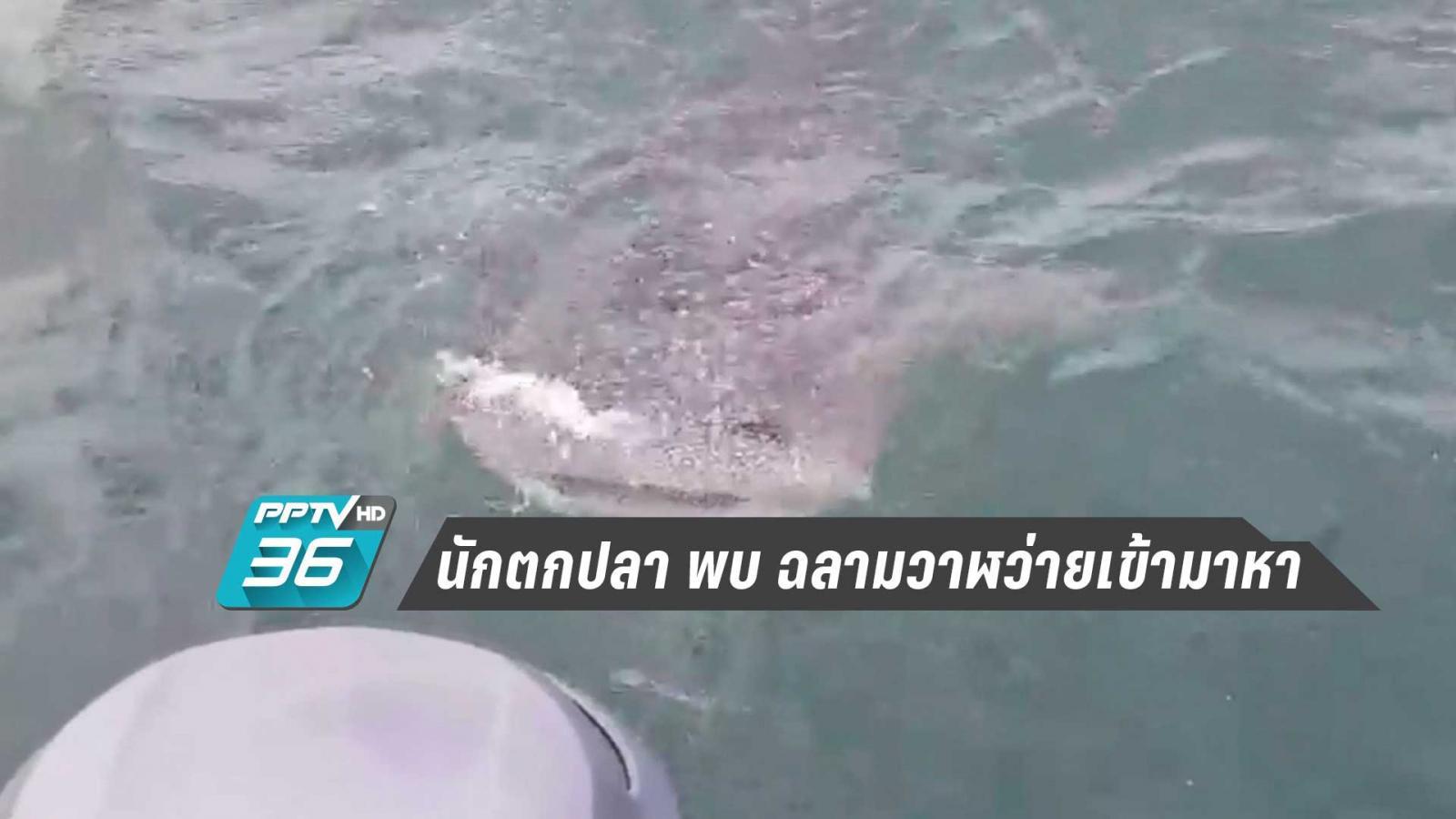 ภาพประทับใจ  นักตกปลา พบ ฉลามวาฬว่ายเข้ามาหา