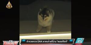 """ตำรวจตรวจดีเอ็นเอ หาคนร้ายบุกขึ้นบ้าน-ขโมยสุนัข """"สเตอร์ริดจ์"""""""
