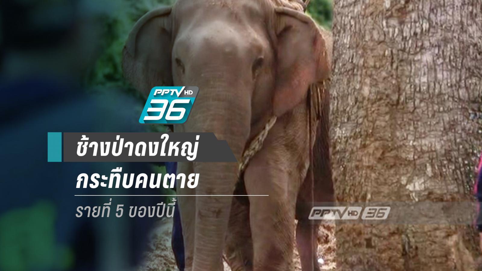 ช้างกระทืบตาย  รายที่ 5 ของปี