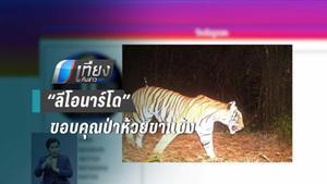 """""""ลีโอนาร์โด"""" ขอบคุณเจ้าหน้าที่ไทยอนุรักษ์เสือ"""