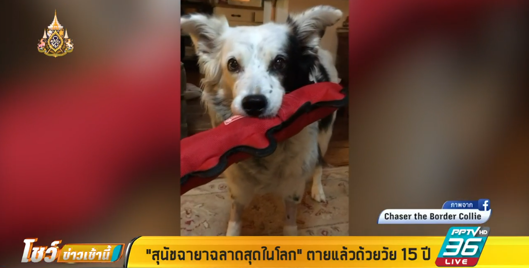 """""""สุนัขฉายาฉลาดสุดในโลก"""" ตายแล้วด้วยวัย 15 ปี"""