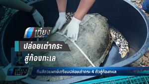 ทีมสัตวแพทย์เตรียมปล่อยเต่ากระ 4 ตัวสู่ท้องทะเล