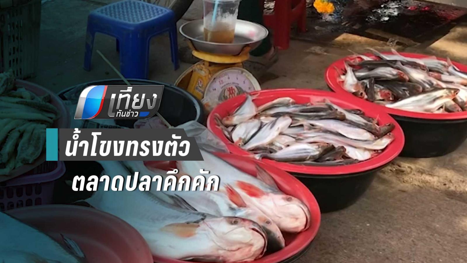 น้ำโขงหนองคายทรงตัว ตลาดปลาคึกคัก