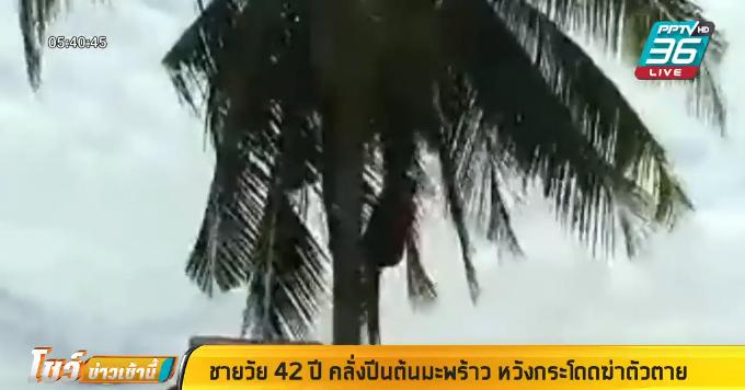 ชายวัย 42 ปี คลั่งปีนต้นมะพร้าว กระโดดลงมาทะลุสังกะสี เจ็บสาหัส