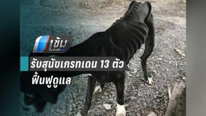 ปศุสัตว์ปทุมธานี รับสุนัขพันธุ์เกรทเดน 13 ตัวฟื้นฟูดูแล