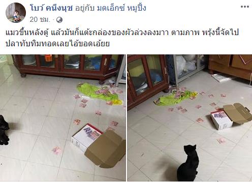 เกมจนได้! แมวขึ้นหลังตู้เตะกล่องร่วง เงินผัวซุกไว้ปลิวว่อน เมียตบรางวัลใหญ่ปลาทับทิมทอด