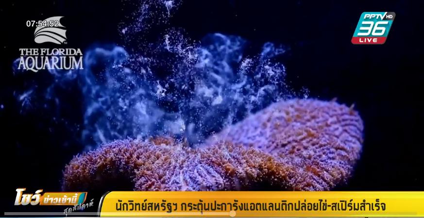 นักวิทย์สหรัฐฯ กระตุ้นปะการังแอตแลนติกปล่อยไข่-สเปิร์มสำเร็จ