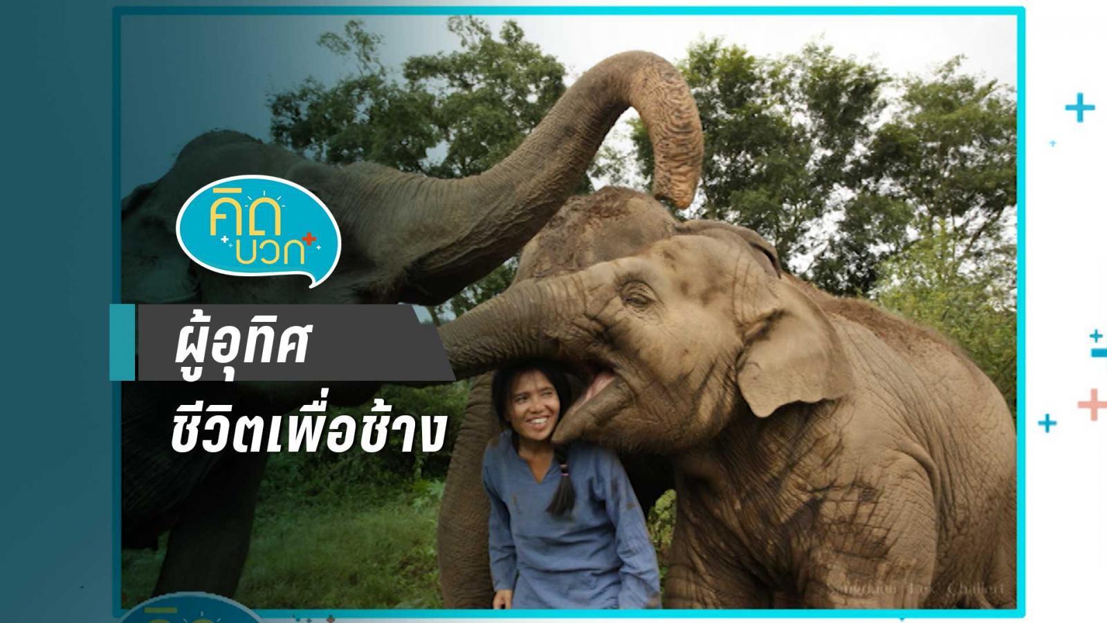 ผู้อุทิศชีวิตเพื่อช้าง
