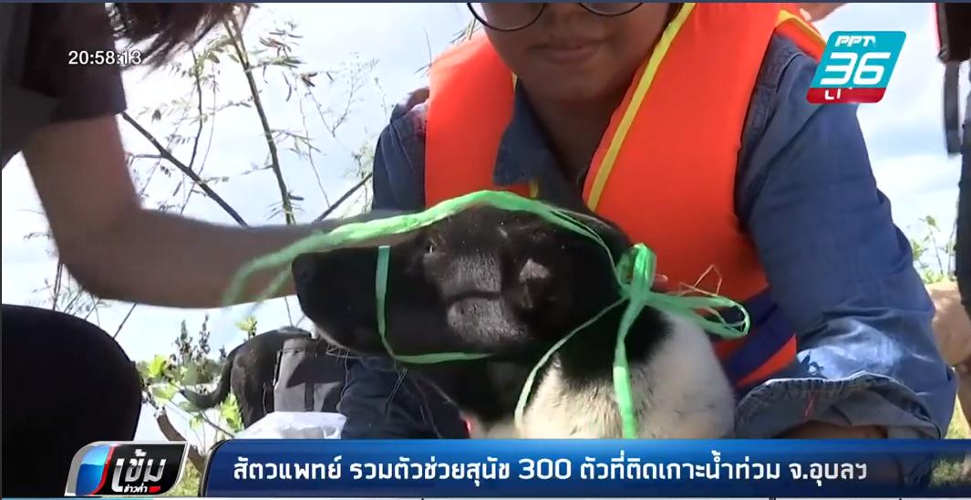 สัตวแพทย์รวมตัวช่วยสุนัข 300 ตัว ติดน้ำท่วม