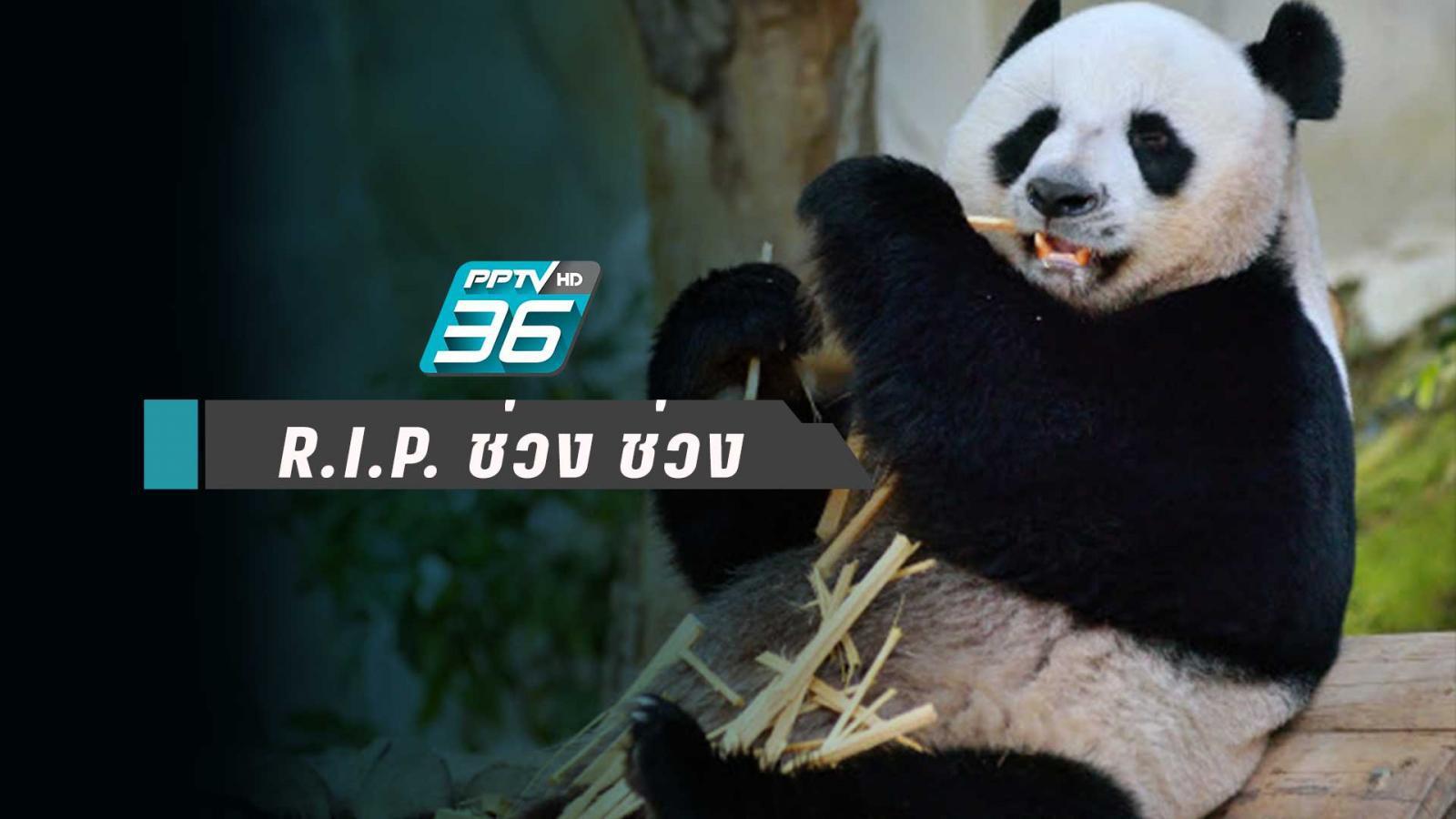 """""""ช่วง ช่วง"""" ตายแล้ว สวนสัตว์เชียงใหม่เตรียมแถลงพรุ่งนี้"""