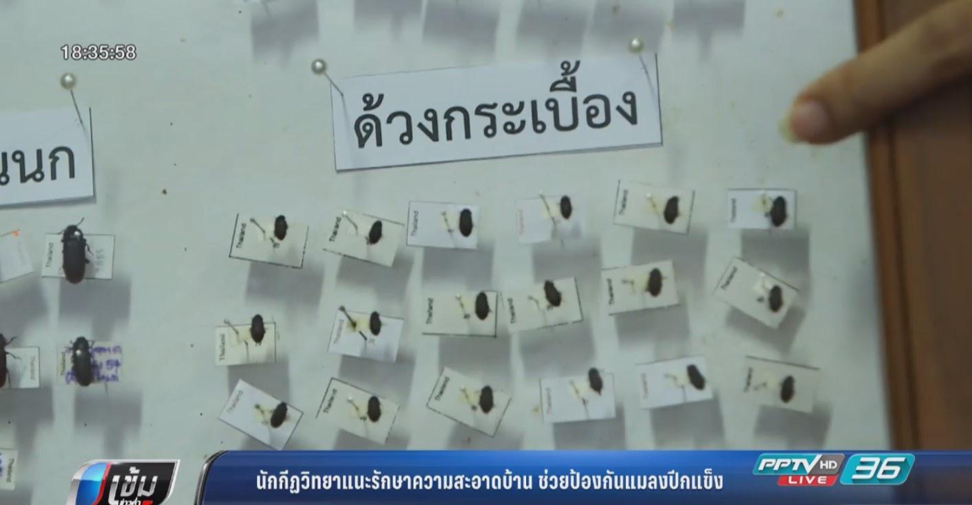 นักกีฏวิทยาแนะรักษาความสะอาดบ้าน ช่วยป้องกันแมลงปีกแข็ง