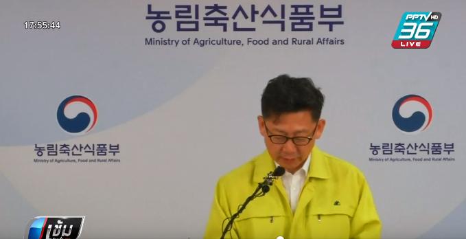 เกาหลีใต้พบการระบาดของโรคไข้หวัดหมู