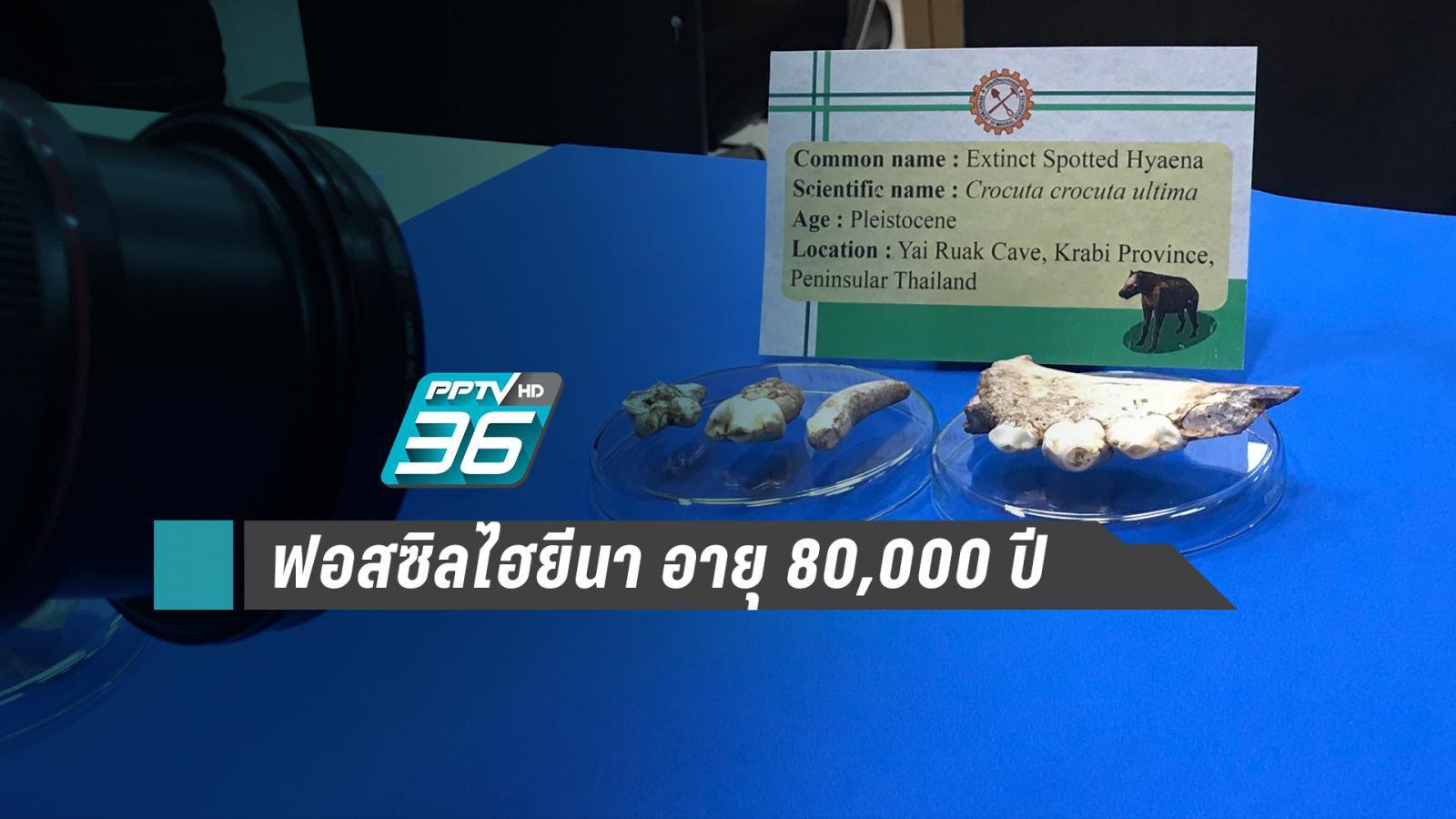 """พบฟอสซิล """"ไฮยีนา"""" อายุ 80,000 ปี ในไทย"""