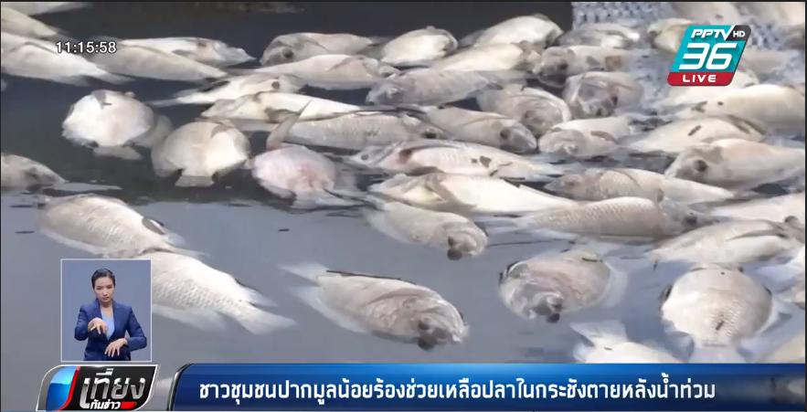 อุบลฯยังระทม ปลาในกระชังน็อกน้ำตายเกลี้ยง