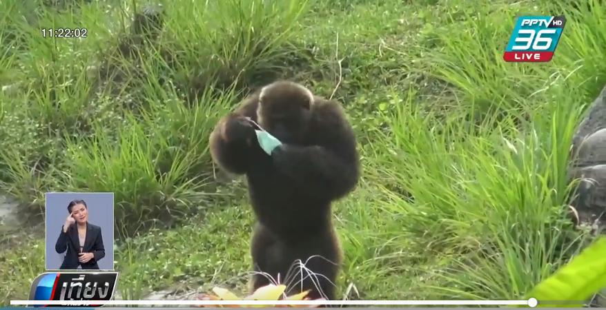 หมอกควัน ลามสงขลาหนัก แจกหน้ากากอนามัยให้ลิง