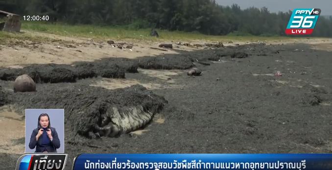 นักท่องเที่ยวร้องตรวจสอบวัชพืชสีดำตามแนวหาดอุทยานปราณบุรี