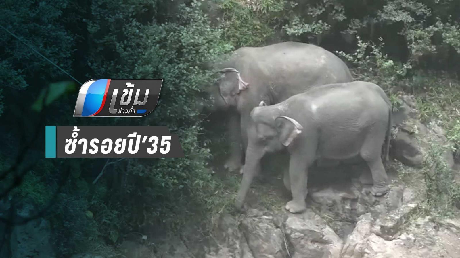 นักอนุรักษ์ คาดฝูงช้างถูกน้ำพัดแรงจนตกเหวนรก ซ้ำรอยปี'35