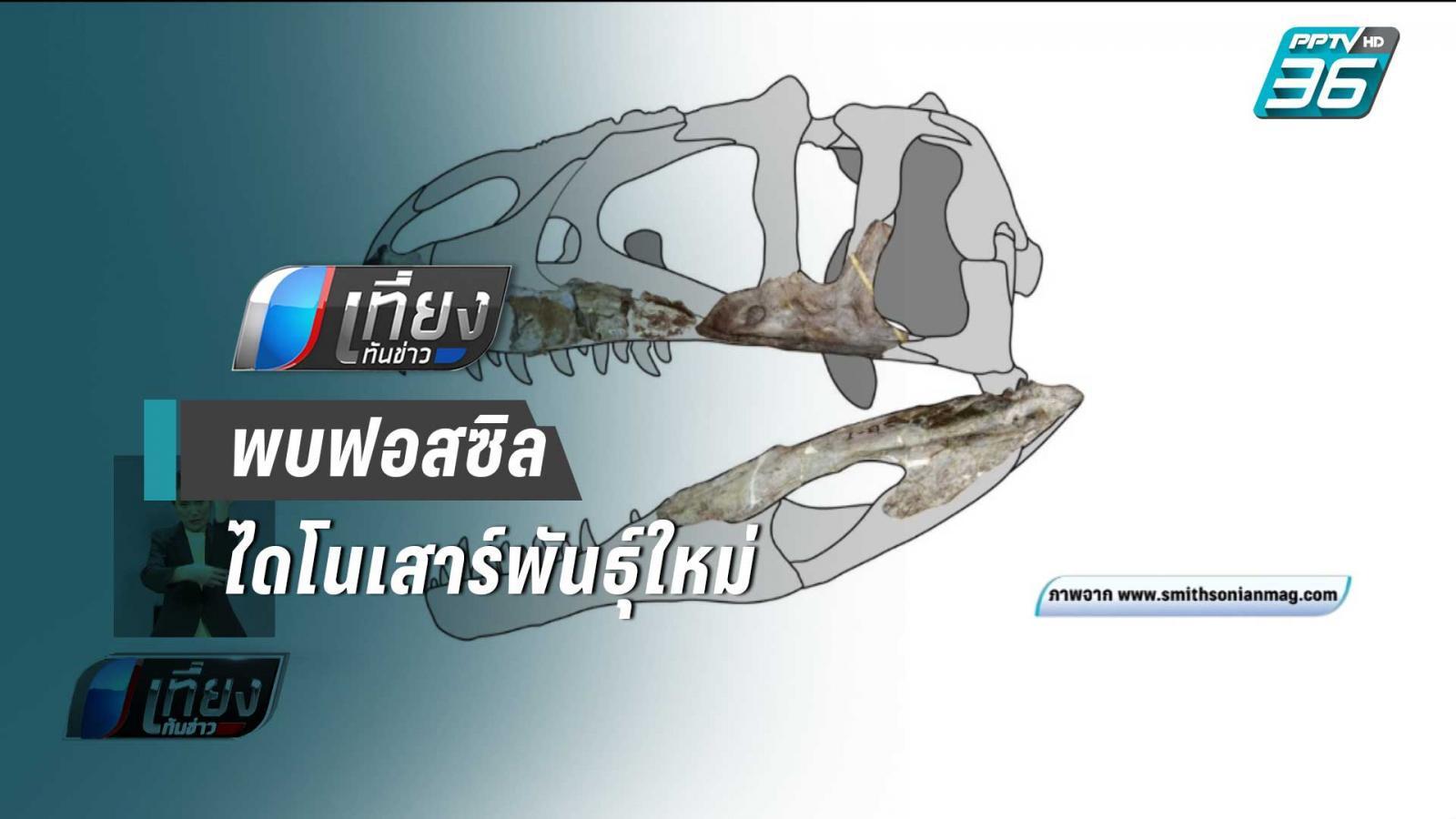 """พบฟอสซิล """"ไดโนเสาร์กินเนื้อพันธุ์ใหม่"""" ของโลกในไทย"""