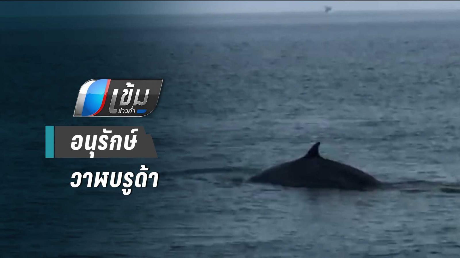 ชุมชนหาดเจ้าสำราญกับความพยายามอนุรักษ์วาฬบรูด้า