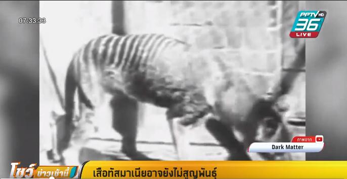 """""""เสือทัสมาเนีย"""" อาจยังไม่สูญพันธุ์"""