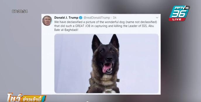 """""""ทรัมป์""""เผยโฉมสุนัขฮีโร่ ล่าผู้นำสูงสุดไอเอส"""