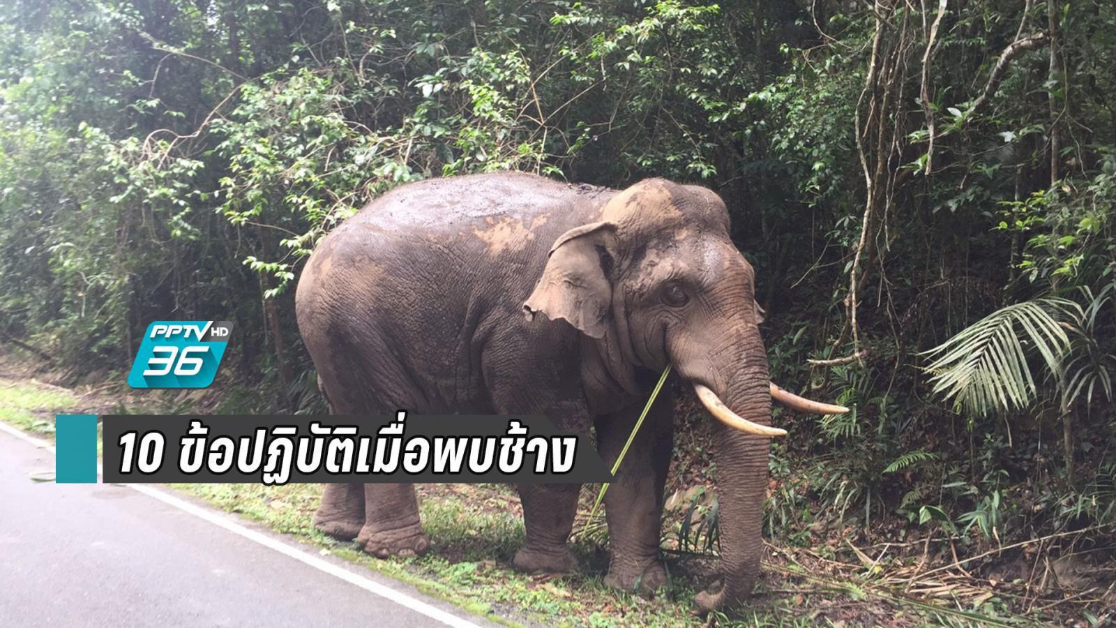 """""""เที่ยวเขาใหญ่รับลมหนาว"""" แนะ 10 ข้อควรปฏิบัติเมื่อพบช้างป่า อวดโฉมบนถนน"""