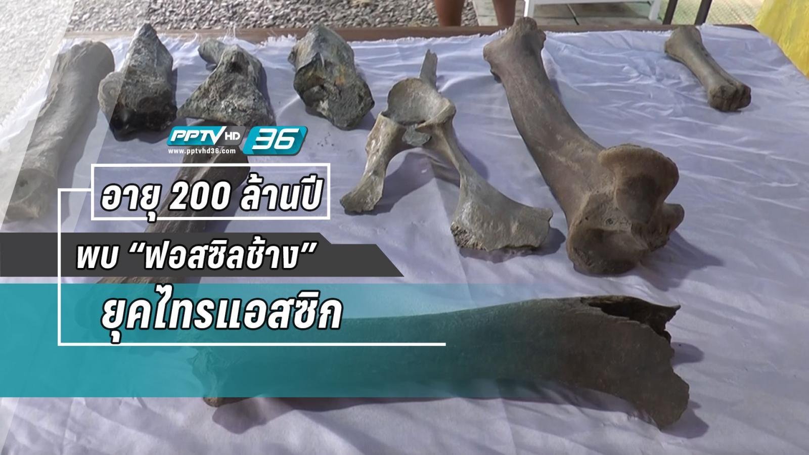 """พบฟอสซิล""""ช้างยุคไทรแอสซิก""""อายุ 200 ล้านปี"""