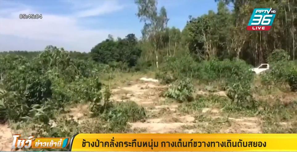 ช้างป่าคลั่งกระทืบหนุ่มกางเต็นท์ขวางทางเดินดับสยอง