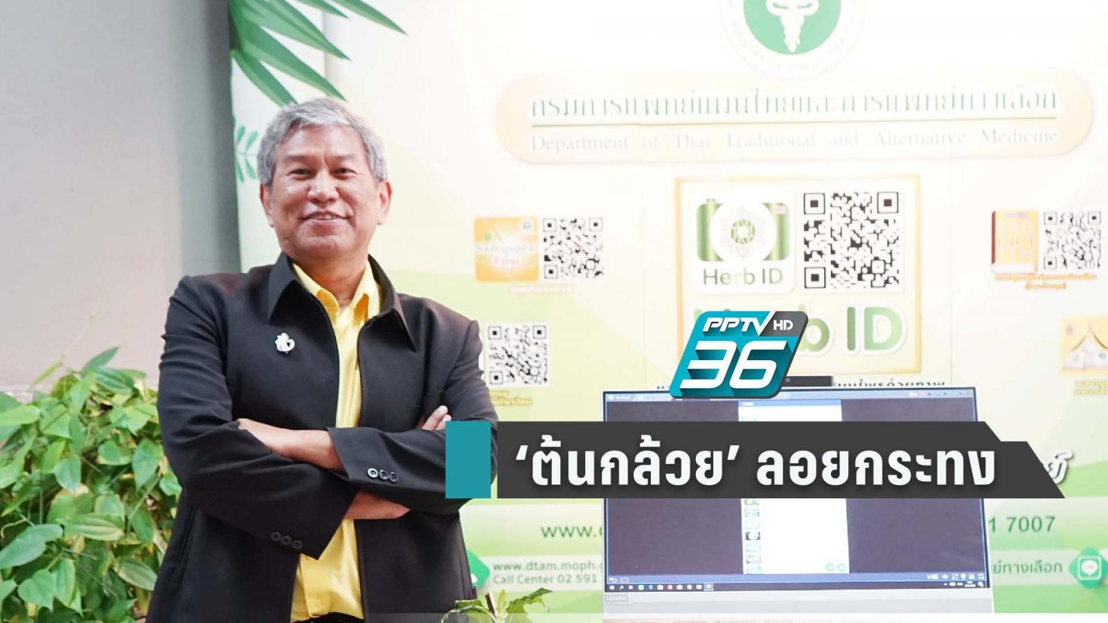 """แพทย์แผนไทยฯชวนลอยกระทงด้วย """"ต้นกล้วย"""" สารพัดประโยชน์"""