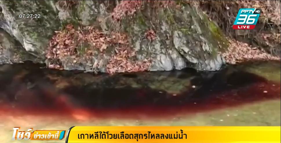 เกาหลีใต้ หวั่น เลือดหมูไหลลงแม่น้ำ มีเชื้ออหิวาต์หมูแอฟริกา