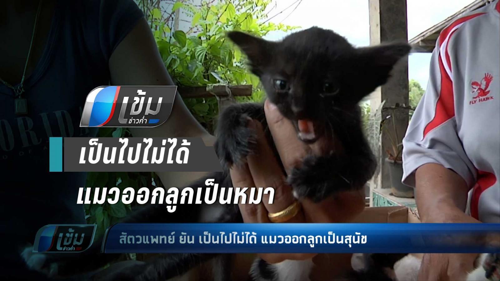 สัตวแพทย์ ยัน เป็นไปไม่ได้ แมวออกลูกเป็นหมา