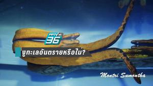 """ถามคำตอบคำ!! ถ้าเจอ """"งูทะเล"""" ตอนดำน้ำต้องทำอย่างไร?"""
