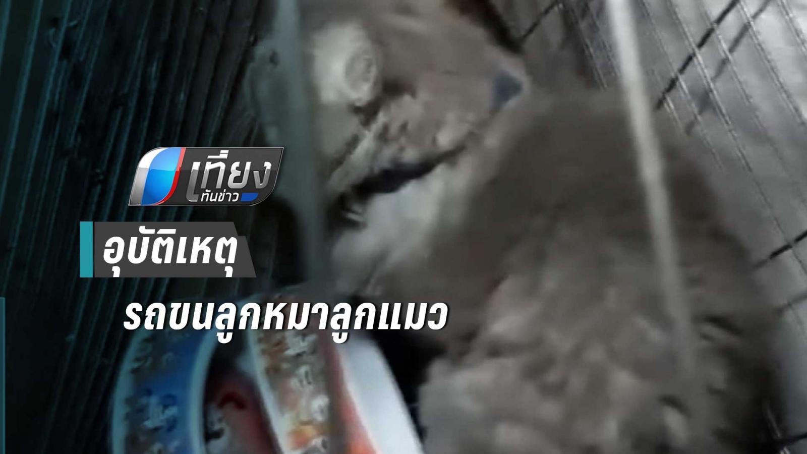 อุบัติเหตุรถขนลูกหมาลูกแมว ตกร่องกลางถนน ยังดีภรรยา –ลูกวัย 4เดือนบาดเจ็บเล็กน้อย