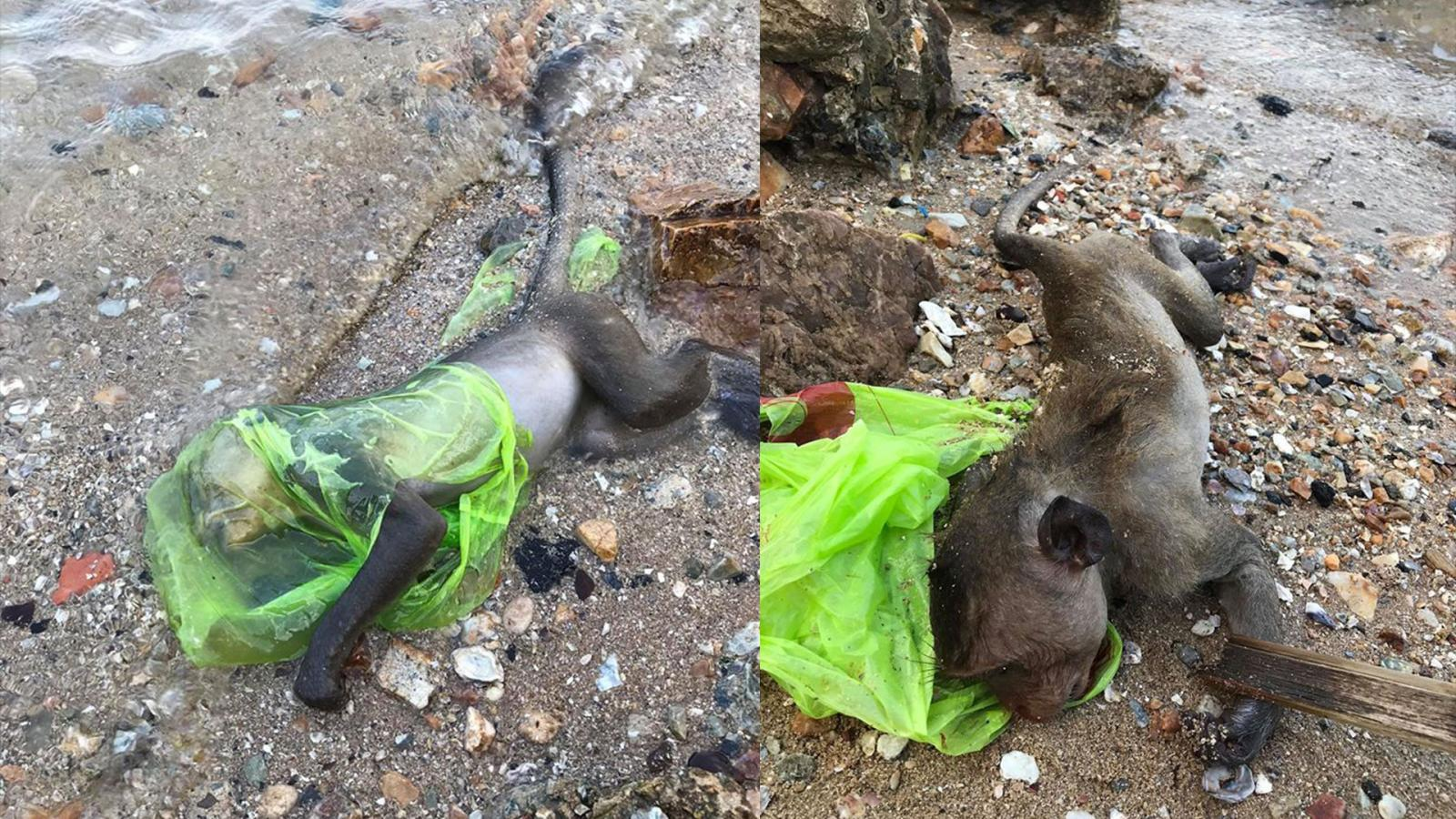 สลด! ลิงมุดหัวกินอาหารในถุงพลาสติกขาดอากาศหายใจดับอนาถ