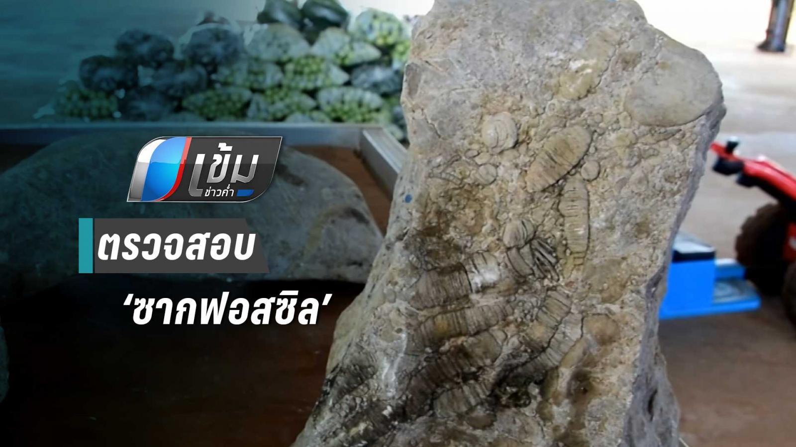 ชาวบ้านพบซากฟอสซิลยุคเพอร์เมียนก่อนไดโนเสาร์สภาพสมบูรณ์