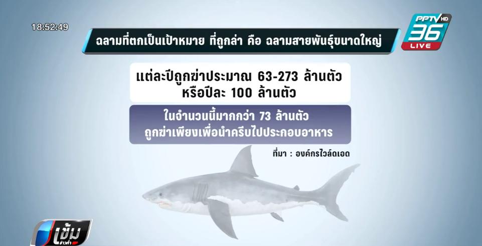 ไทยติด 1 ใน 10 ส่งออกหูฉลามมากสุดของโลก