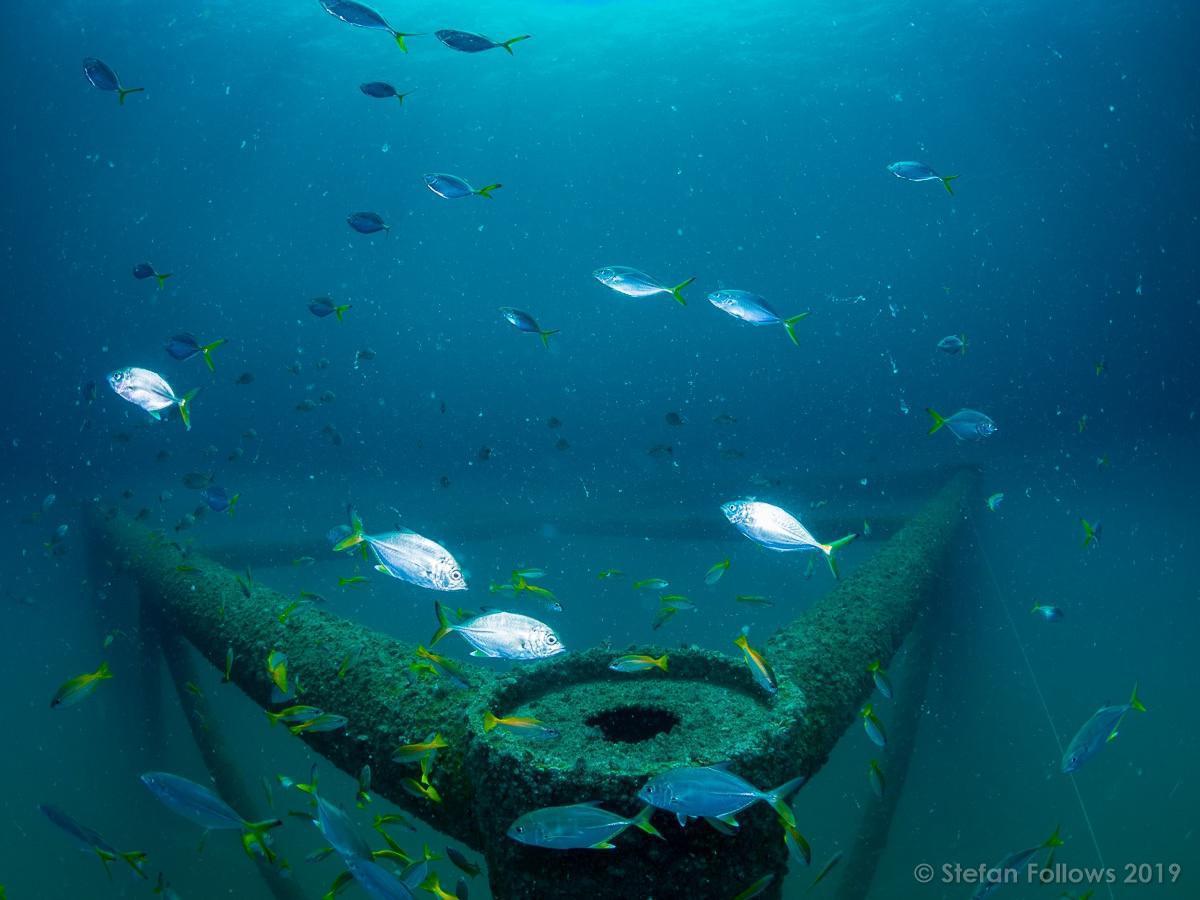 ฟังเสียงสะท้อนจากชาวโฉลกหลำหลังได้ 'บ้านปลาหลังใหญ่' กลับสู่ท้องทะเล