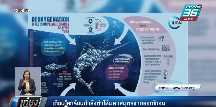 เตือนโลกร้อนกำลังทำให้มหาสมุทรขาดออกซิเจน
