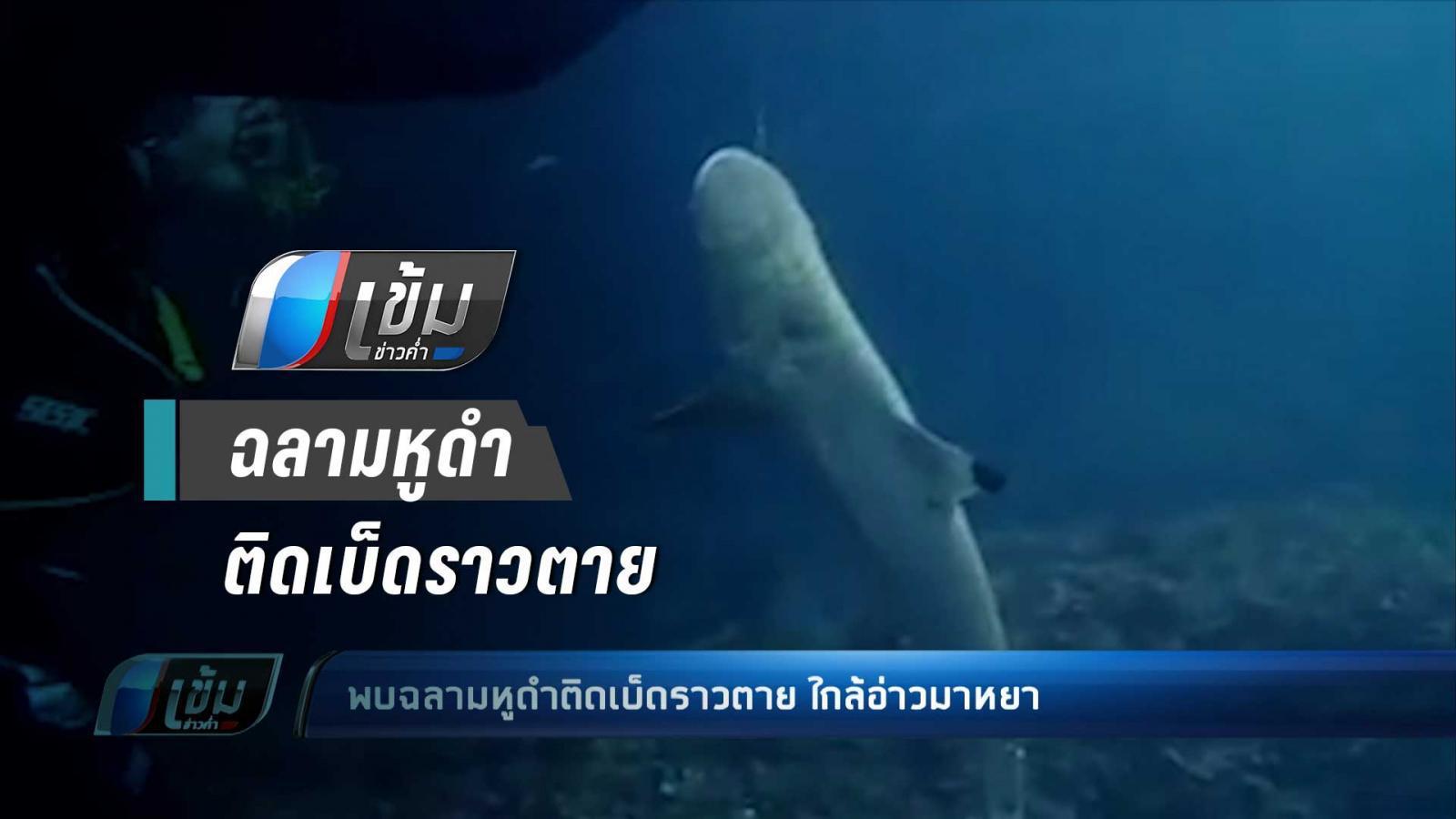 พบฉลามหูดำติดเบ็ดราวตาย ใกล้อ่าวมาหยา