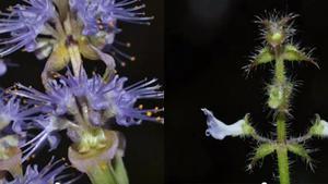 """พบ""""พืชพันธุ์ใหม่ของโลก"""" 8 ชนิดในไทย"""
