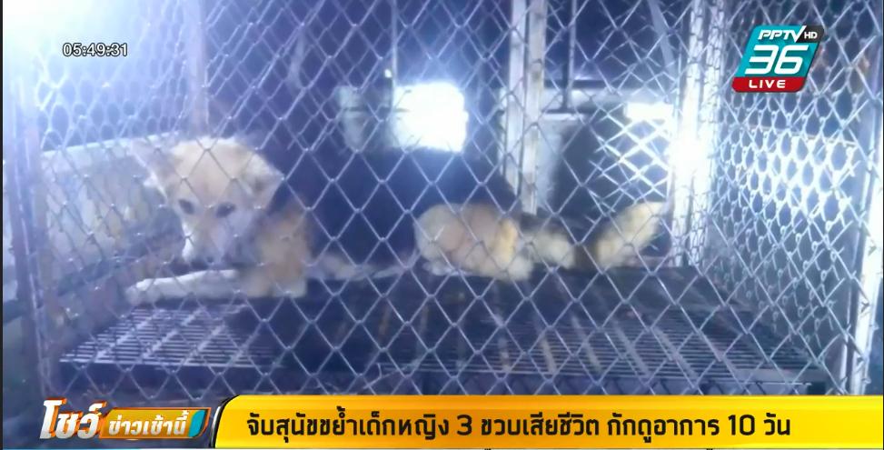 จับสุนัข ขย้ำเด็กหญิง 3 ขวบเสียชีวิต