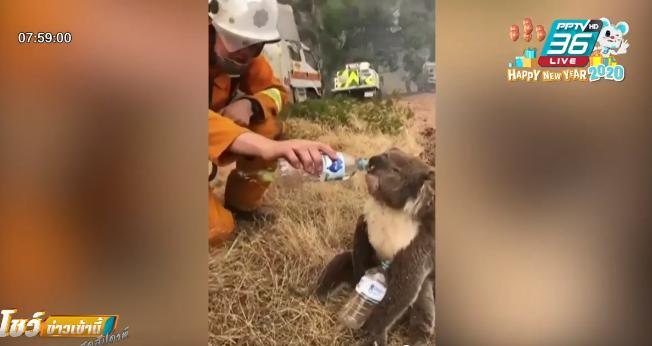 """ห่วง """"โคอาลา""""หลายพันตัวตาย เพราะไฟป่าออสเตรเลีย"""