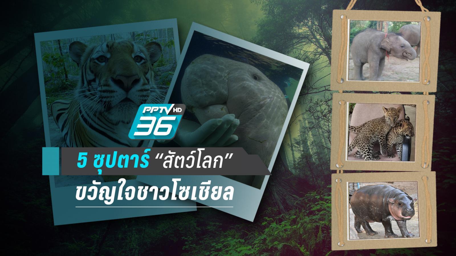 เปิดตัว 5 ซุปตาร์ขวัญใจโซเชียล หลากหลายสายพันธุ์ผู้ขโมยหัวใจคนไทยทั้งประเทศ