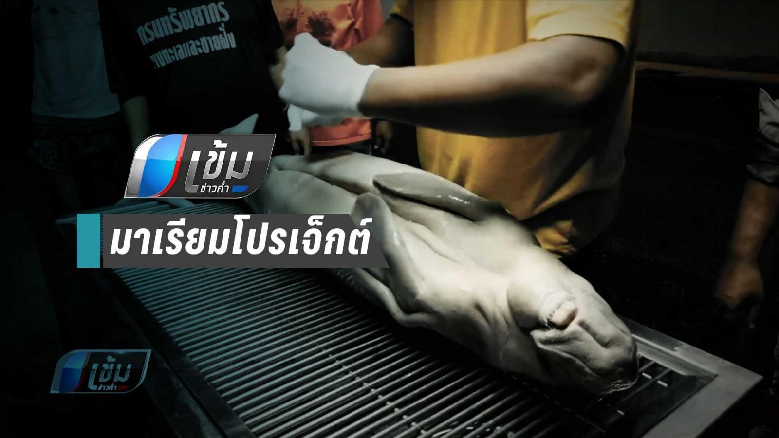 ถุงพลาสติกฆ่าชีวิตสัตว์ทะเล