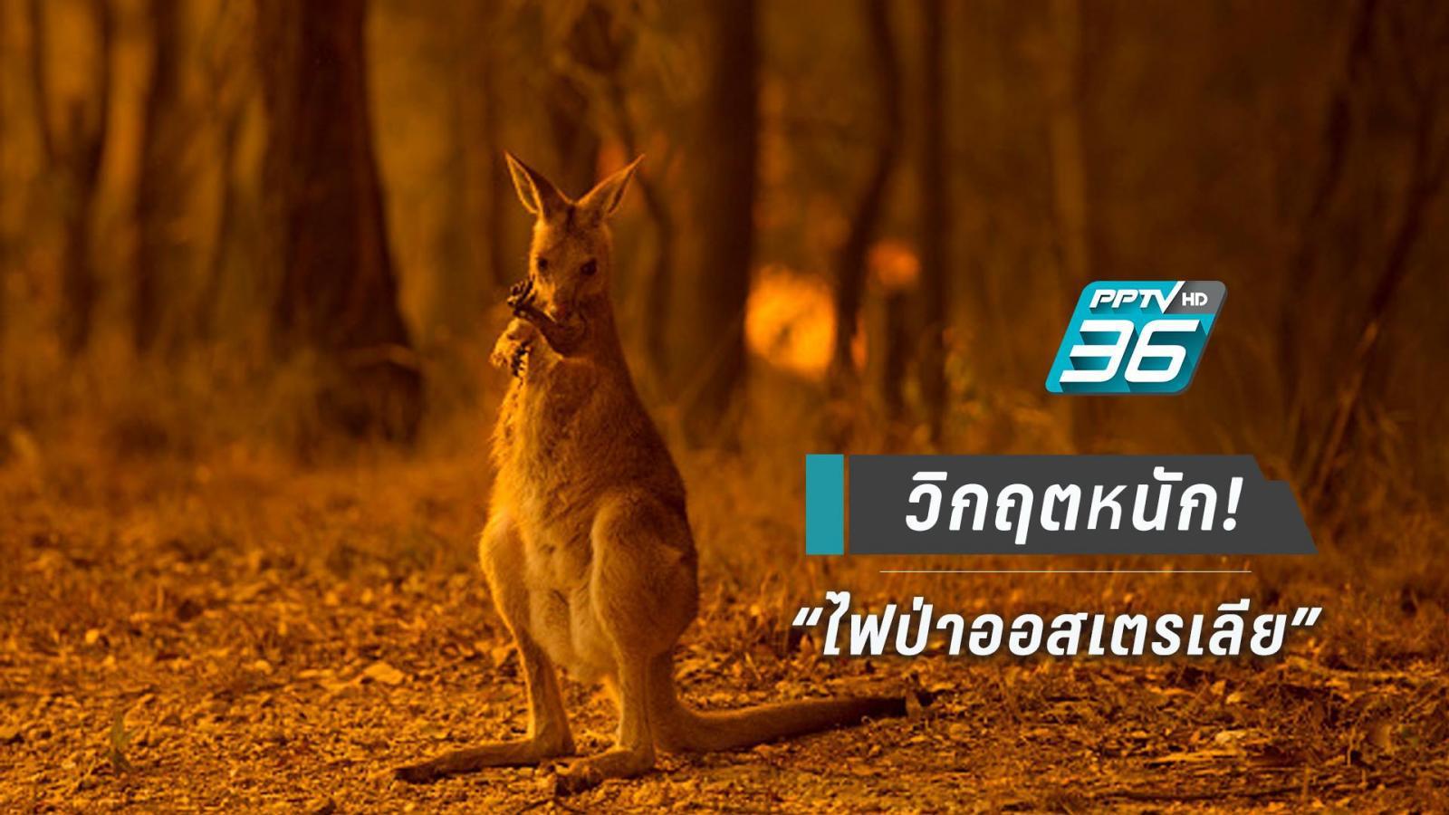 """ความเสียหาย """"ไฟป่าออสเตรเลีย"""" คร่าชีวิตสัตว์ป่าและผู้คน"""