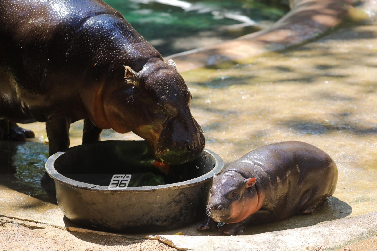 ทำไมวันเด็กต้องเที่ยวสวนสัตว์ แล้วปีนี้ที่สวนสัตว์มีอะไรรอเด็กๆ