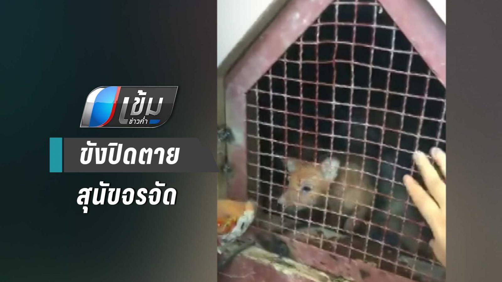 """""""วอชด็อก ไทยแลนด์"""" ช่วยสุนัขหิวโซกว่า 10 ตัว  ถูกขังปิดตายใต้ถุนศาลากลางเชียงใหม่"""