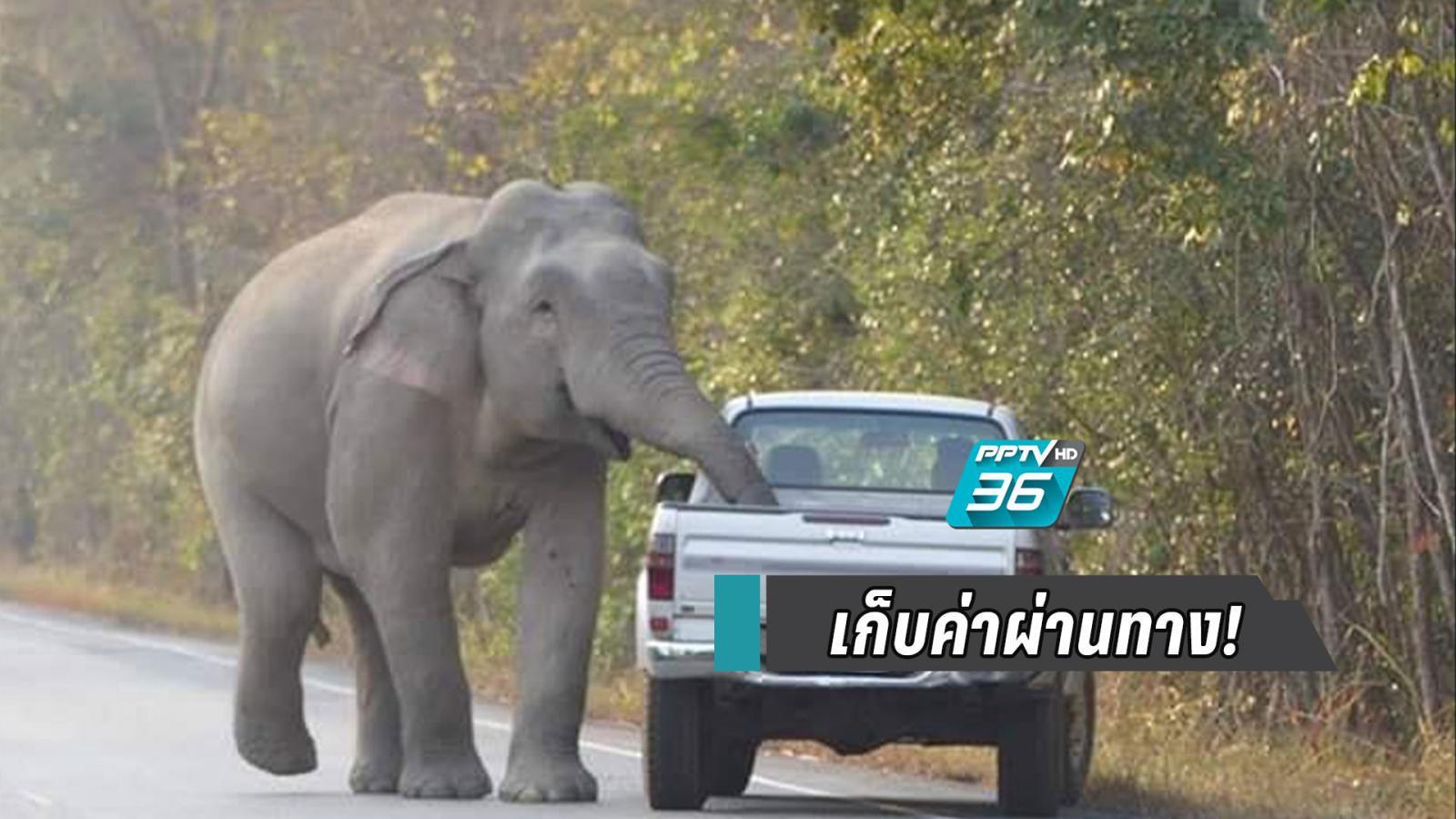 เตือนผู้ใช้เส้นทางหลวง 3076 ระวังช้างป่ารื้อค้นสิ่งของ